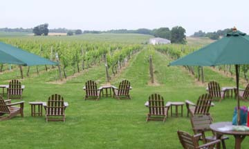 vineyard02.jpg