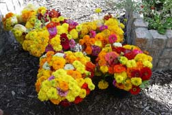 Marigolds and flowers from Garden of Eve